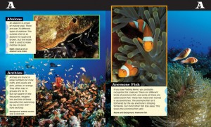 Inside Look at Ocean Life A to Z Book
