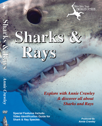 Sharks & Rays DVD