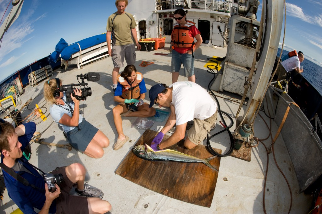 Dorado Dissection SEAPLEX Expedition Project Kaisei Annie Crawley Photography
