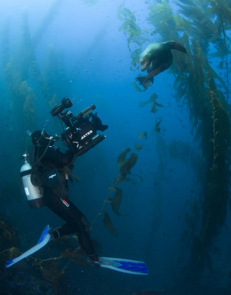 Annie Crawley Filmming Sea Lion - Andrew Sallamon Photography - Underwater Filmmaker Annie Crawley - Media Resources