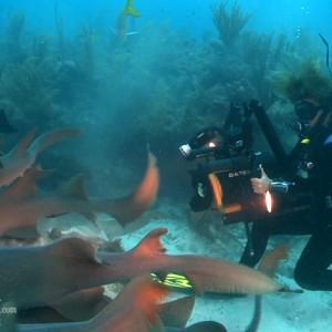 Annie Crawley Films Nurse Sharks