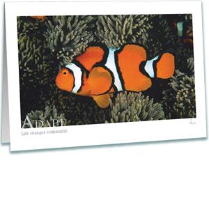 Clownfish Greeting Card - Underwater Photography - True Clownfish Sea Anemone - AnnieCrawley.com