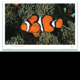 Adapt Poster Clownfish - Clownfish Poster - Inspirational Poster