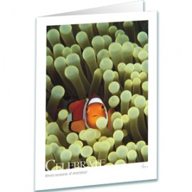 Clownfish Greeting Card - Celebrate - Inspirational Greeting Cards - Underwater Photography - AnnieCrawley.com