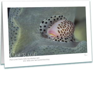 Courage Greeting Card - Cowrie Shell - Inspirational Greeting Cards - Underwater Photography - AnnieCrawley.com