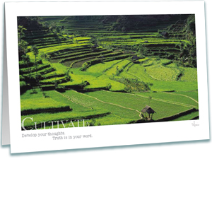 Rice Fields Greeting Card - Inspirational Greeting Cards - Photography - AnnieCrawley.com
