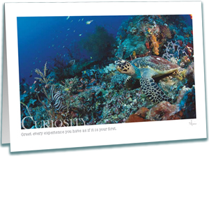 Hawksbill Turtle Greeting Card - Underwater Photography - Inspirational Greeting Cards - AnnieCrawley.com - Hawksbill Turtle on Coral Reef