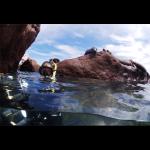 Dive into California