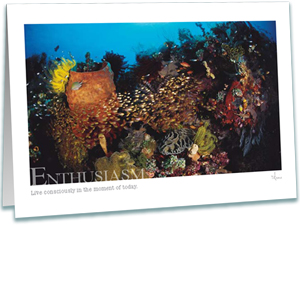 Coral Reef Greeting Card - Inspirational Greeting Cards - Underwater Photography - AnnieCrawley.com - Enthusiasm