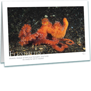 Octopus Greeting Card - Underwater Photography - Inspirational Greeting Cards - AnnieCrawley.com - octopus luteus