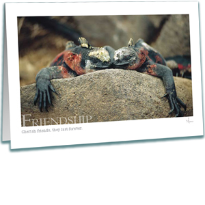 Friendship Greeting Card - Photography - Marine Iguanas - AnnieCrawley.com