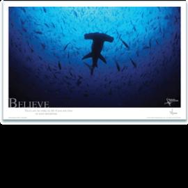 Believe Poster - Hammerhead Shark Poster - Inspirational Poster - Underwater Photography - AnnieCrawley.com