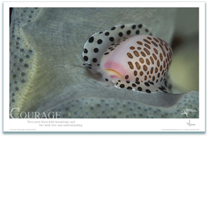 Courage Poster - Cowrie Shell Poster - Inspirational Poster - Underwater Photography - AnnieCrawley.com