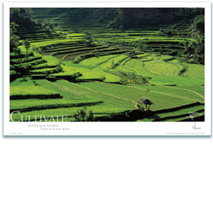 Rice Fields Poster - Inspirational Poster - Underwater Photography - AnnieCrawley.com