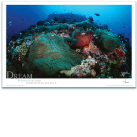 Coral Reef Poster - Inspirational Poster - Underwater Photography - AnnieCrawley.com