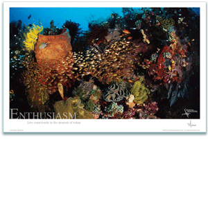 Enthusiasm Poster - Coral Reef Poster - Inspirational Poster - Underwater Photography - AnnieCrawley.com