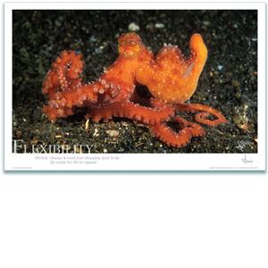 Octopus Poster - Inspirational Poster - Underwater Photography - AnnieCrawley.com