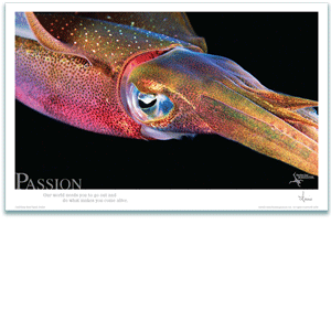 Passion Poster - Reef Squid Poster - Inspirational Poster - Underwater Photography - AnnieCrawley.com