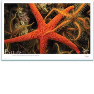 Patience Poster- Sea Star Poster - Inspirational Poster - Underwater Photography - AnnieCrawley.com