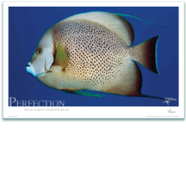 Angel Fish Poster - Inspirational Poster - Underwater Photography - AnnieCrawley.com
