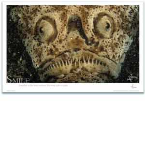 Stargazer Poster - Inspirational Poster - Underwater Photography - AnnieCrawley.com