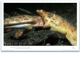 Snake Eel Poster - Inspirational Poster - Underwater Photography - AnnieCrawley.com