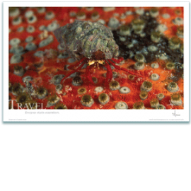 Travel Poster - Hermit Crab Poster - Inspirational Poster - Underwater Photography - AnnieCrawley.com