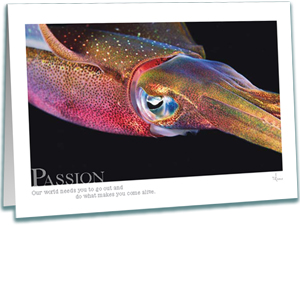 Passion Greeting Card - Reef Squid - Inspirational Greeting Cards - Underwater Photography - AnnieCrawley.com
