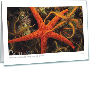 Sea Stars Greeting Card - Practice Patience - Inspirational Greeting Cards - Underwater Photography - AnnieCrawley.com