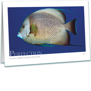 Angel Fish Greeting Card - Underwater Photography - Inspirational Greeting Cards - AnnieCrawley.com