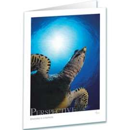Turtle Greeting Card - Perspective Greeting Card - Inspirational Greeting Cards - Underwater Photography - AnnieCrawley.com