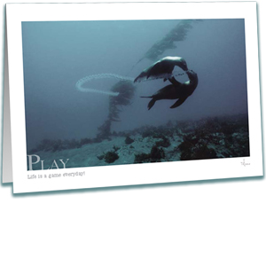 Sea Lions Greeting Card - Underwater Photography - Play - Inspirational Greeting Cards - AnnieCrawley.com - sealions playing with pelagic tunicates
