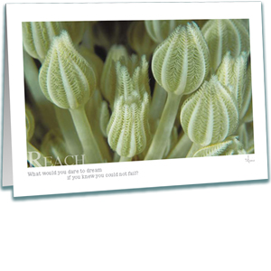 Octocoral Greeting Card - Underwater Photography - Inspirational Greeting Cards - AnnieCrawley.com
