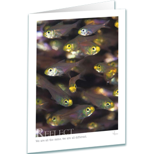 Reflect - Glass Fish Greeting Card - Inspirational Greeting Cards - Underwater Photography - AnnieCrawley.com