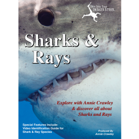 Sharks & Rays DVD - Shark Movies - Shark Films