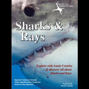 Sharks & Rays DVD - Shark Movies - Shark Films