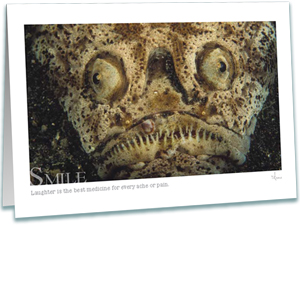 Stargazer Greeting Card - Underwater Photography - Inspirational Greeting Cards - AnnieCrawley.com - Stargazer Fish