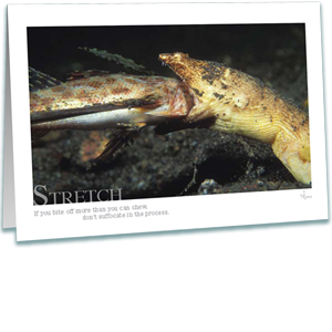 Snake Eel Eating Greeting Card - Underwater Photography - Inspirational Greeting Cards - AnnieCrawley.com - snake eel eating a flying gunard fish