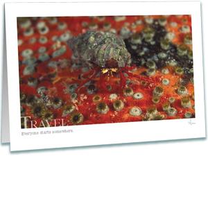 Hermit Crab Greeting Card - Underwater Photography - AnnieCrawley.com