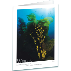 Kelp Forest Greeting Card - Wisdom - Inspirational Greeting Cards - Underwater Photography - AnnieCrawley.com