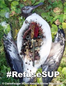 If birds eat plastic they die.