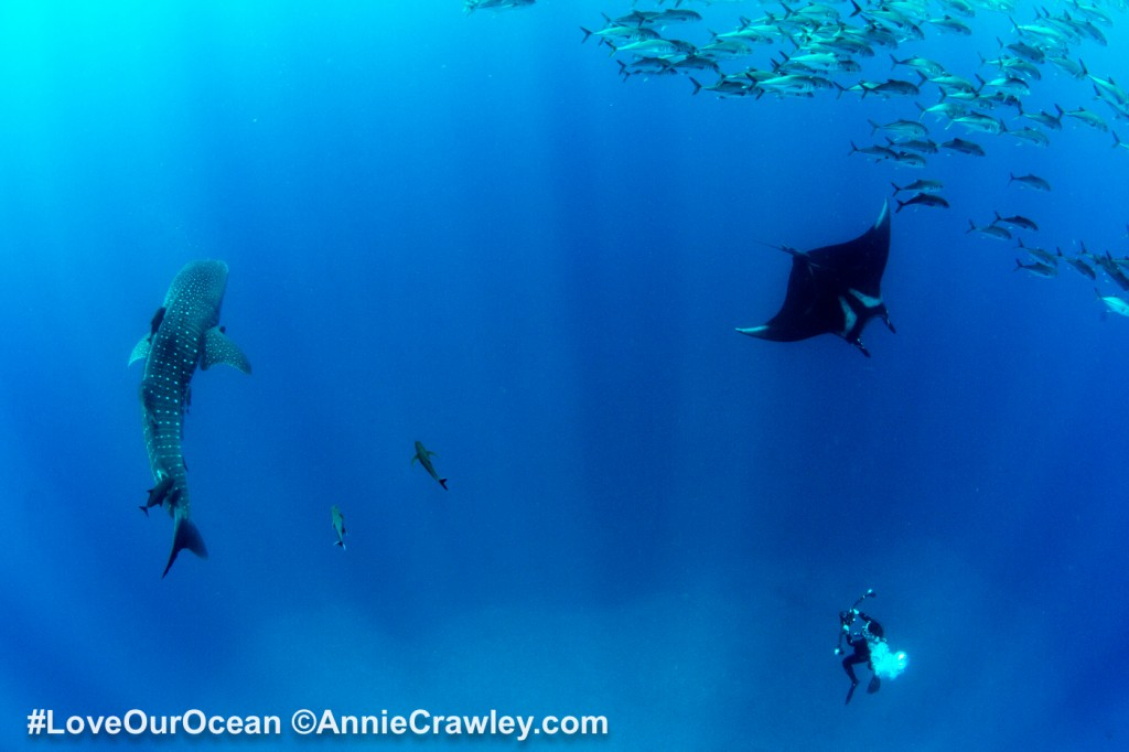 Love Our Ocean #LoveOurOcean