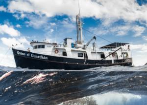 Quino El Guardian Midriff Island Expedition