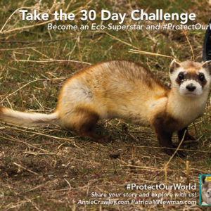 Black footed ferrets were thought to be extinct. Zoo scientist Jeff Baughman breeds black-footed ferrets