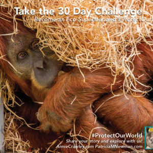 Orangutans in the wild are dying because of loss of habitat. Zoo scientists help