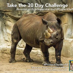 Black Rhinoceroses in the wild need our help. Zoo scientist Rachel Santymire helps
