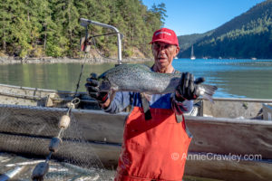 Lummi Nation Elder holds deformed farmed Atlantic salmon.