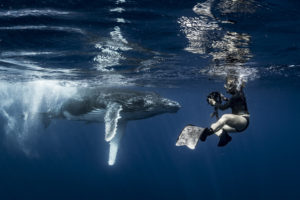 Underwater Photographer Annie Crawley Swims with Baby Humpback Whale